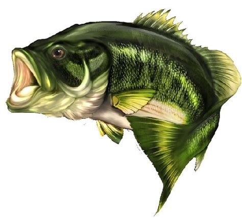 Images Of Bass Fish Bass Fish Board Vinyl Graphic Decals Ebay