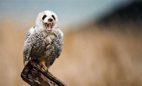 hilarious  fictional animal hybrids