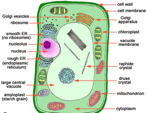 science  cell multicellularity    perspective