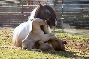 PetsJubilee: A baby horse on its mom's lap