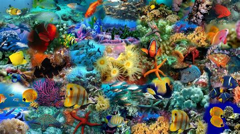 3d Animal Wallpaper 3d Fish Wallpaper - fish wallpapers wallpaper cave