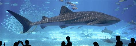 top 10 des plus grands aquariums du monde