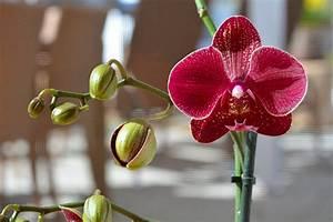 Orchideen Umtopfen Video : orchideen pflegen aber richtig orchideen umtopfen ~ Watch28wear.com Haus und Dekorationen