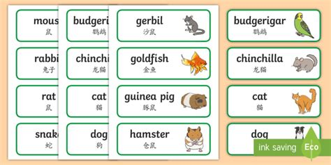 Pets Topic Word Cards English/mandarin Chinese