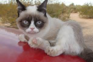 grumpy cat grumpy cat angry collection world