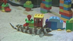 Four baby bamboo sharks given dream nursery at Legoland ...