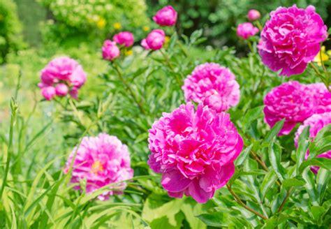 Die Schönsten Blumen Für Den Garten bl 252 tenpracht fr 252 hjahr bis herbst wie es funktioniert