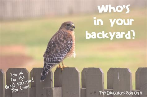 the educators spin on it the great backyard bird count