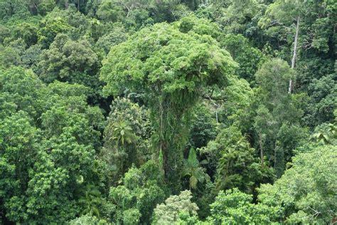 Rainforest in Australia The Royal Botanic Garden Sydney