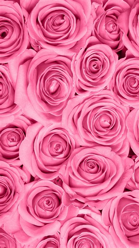 Pink Roses Background Pink Background 183