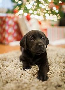 Christmas puppies! (10 photos) - ThatMutt.com: A Dog Blog