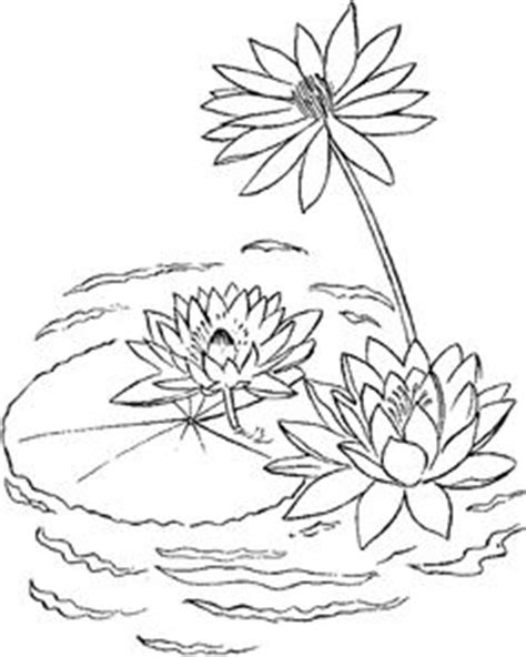31 Water lily ideas | water lily, lilies drawing, water