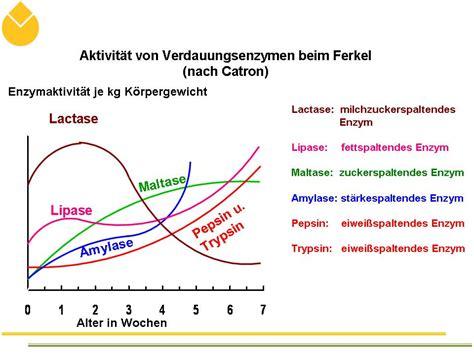 die verdauung der nährstoffe durch enzyme