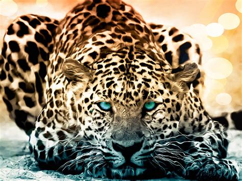 amazing wildlife animal wallpapers hongkiat