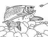 Trout Coloring Pages Apache Fisherman Bair Chasing Fishing Tocolor sketch template