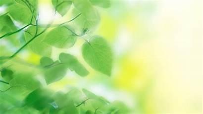 Nature Greenery Water Wallpapers Prints Leaf Air