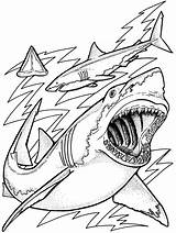 Ocean Coloring Pages Fish Printable sketch template