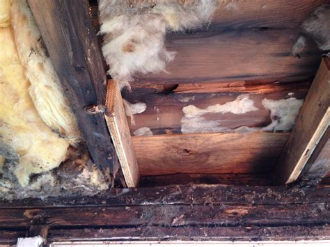 framing      rotten top plate   wall