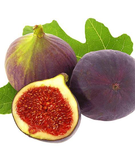 frucht feige rouge de bordeaux gross pflanze ficus