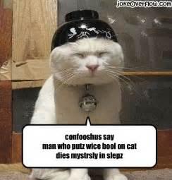 cat jokes cat joke overflow joke archive