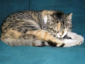 sleeping cat file cat sleep jpg