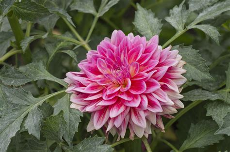3 Unique Flowers To Grow In Your Garden This Summer