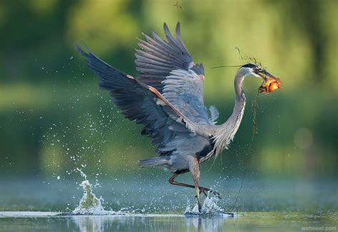 best bird photography by christopher 13 full image