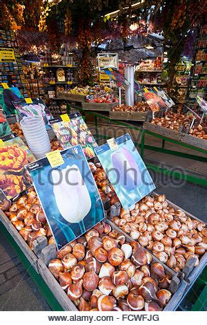 display of tulips or tulip bulbs for sale in istanbul