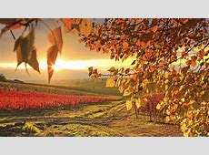 1600 x 900 Fall Wallpaper WallpaperSafari
