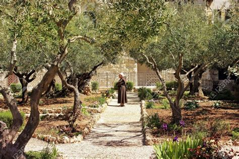 Garden Of Gethsemane  Tourists In Israel