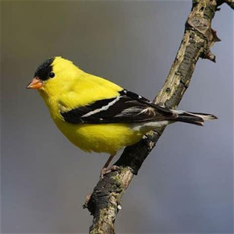 beautiful birds  minnesota