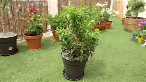 planter un arbuste persistant minutefacile