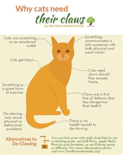 how do cats to be to get declawed don t declaw helpful hints pets