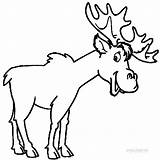 Moose Coloring Pages Printable Elk Funny Drawing Outline Clipart Head Cool2bkids Templates Animals Animal Clip Template Skull Getdrawings Clipartmag Library sketch template