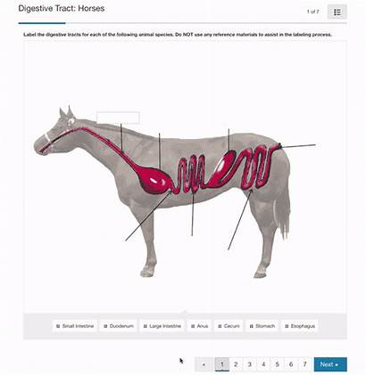Livestock Nutrition Science Digestive Tract Horse Icev