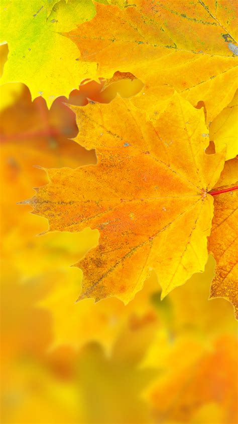 Permalink to Nature Wallpaper Leaves