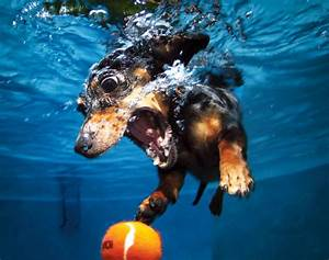 seth casteels underwater dogs photo gallery