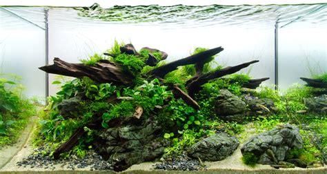 started  freshwater aquascaping howtoaqua