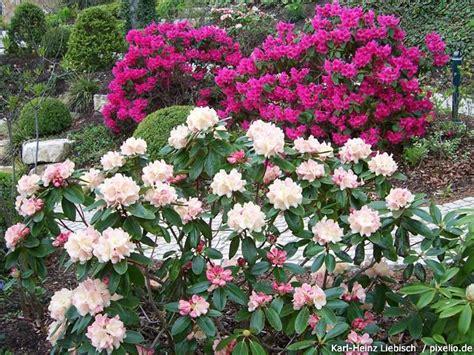 welche pflanzen passen zu hortensien welche pflanzen