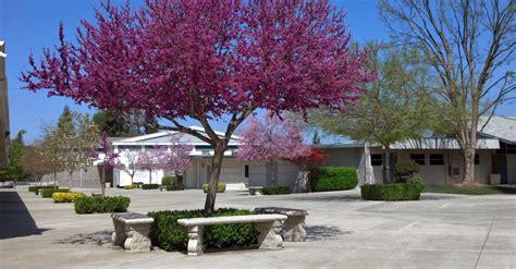 sundale union elementary school district sundale union