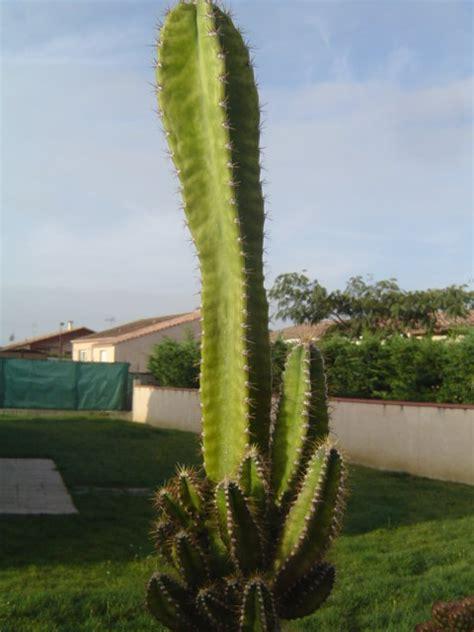 id et cactus colonaire resistant au gel