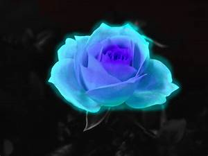 Neon Ice Rose by koshplappit on DeviantArt