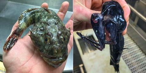 15 Of The Creepiest Deep Sea Creatures