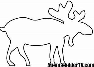 Elch Vorlage Kostenlos : elch malvorlage ~ Lizthompson.info Haus und Dekorationen