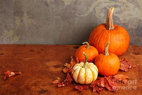 pumpkins and fall pictures decorative fall pumpkins photograph by verena matthew