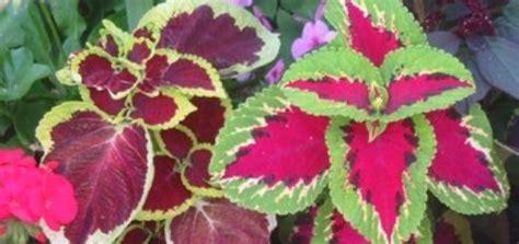 plante en pot exterieur sans entretien pivoine etc