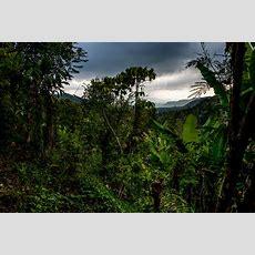 Filein The Jungle, The Mighty Jungle (21740460784)jpg