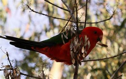 Parrot Wallpapers 1920 1200 Animal