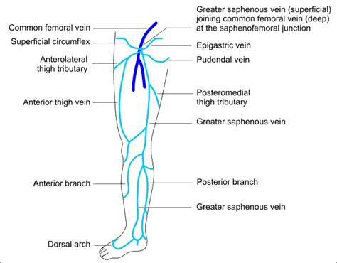 Gastrocnemius Vein Clot