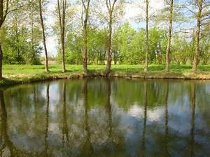 Teich Im Garten : ferienhaus erlensteg spreewald frau karin klinge ~ Lizthompson.info Haus und Dekorationen